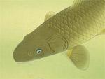 Japanese painting - fish